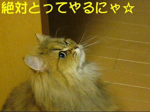 MVI_1166q.jpg