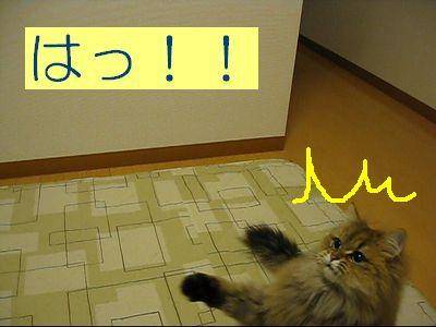 MVI_2014g.jpg